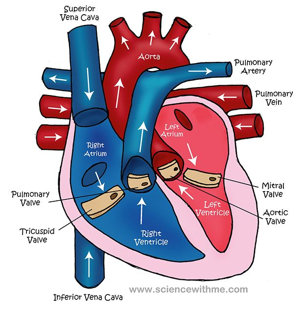 The Fibrillating Heart | medical plaintalk